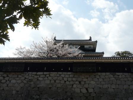 松山城 天守閣と桜 2