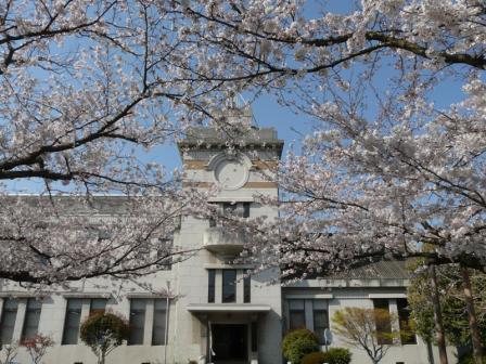 松山地方気象台の桜