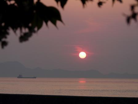 モンチッチ海岸 夕日と桜 1