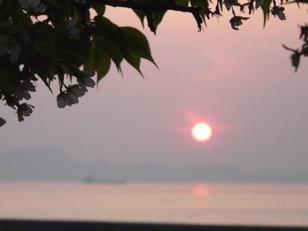 モンチッチ海岸 夕日と桜 2