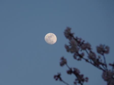月と桜 1
