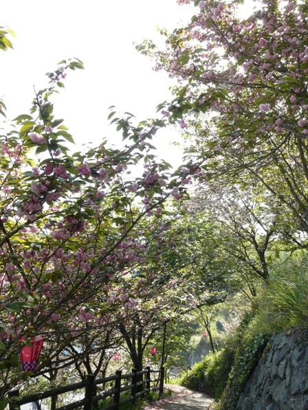 祇園公園 1