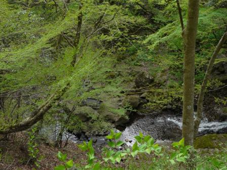白猪の滝 4月 2