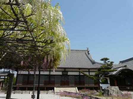 長福寺 藤 3