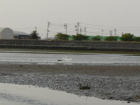 重信川河口 5