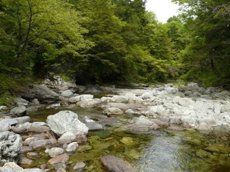 住友の森 水辺 1