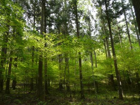 住友の森 新緑