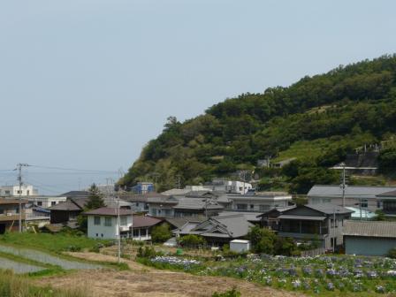 櫛生菖蒲園 2