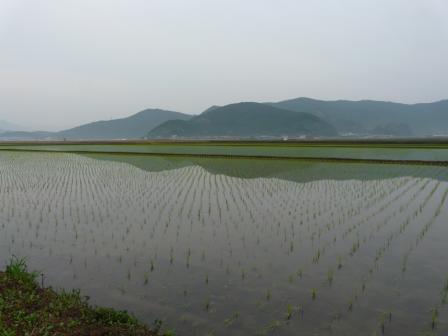 宇和町 田園地帯