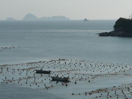 愛南町の海 真珠の養殖
