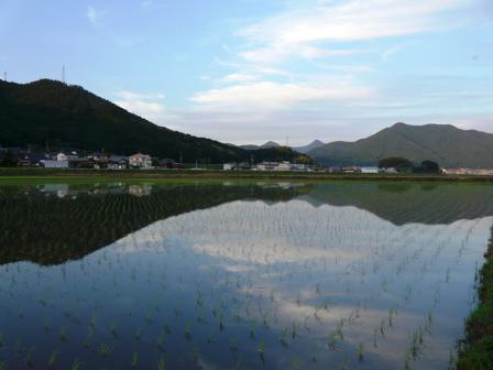 宇和町 水田地帯の夕 2