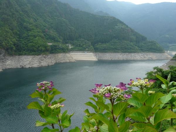 富郷 ダム 貯水 率