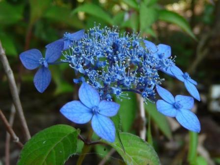 惣河内神社 藍姫