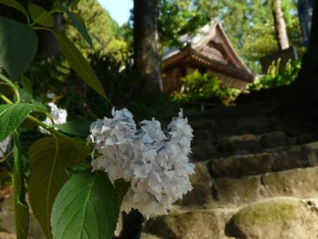 惣河内神社 花吹雪 1