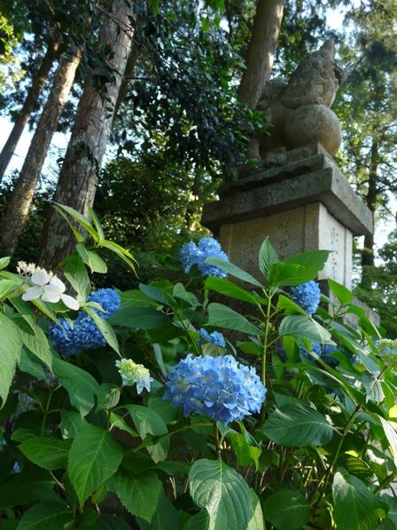 惣河内神社 紫陽花 3