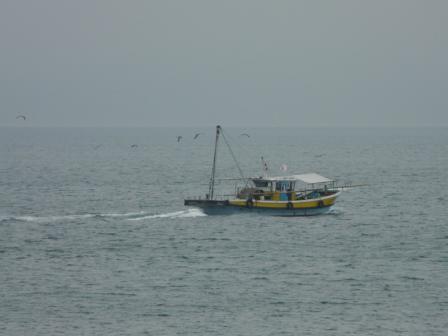 漁船とウミネコたち