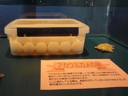 日和佐うみがめ博物館 アカウミガメの卵