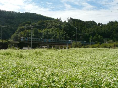 中山町 そば畑と列車 (2000系)
