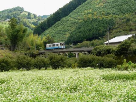 中山町 そば畑と列車 (キハ32形) 1