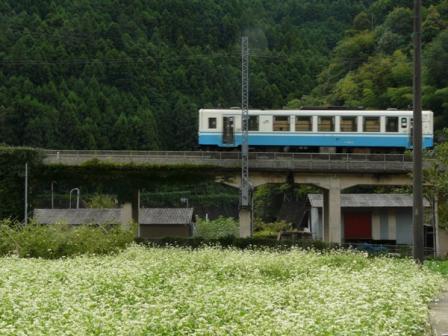 中山町 そば畑と列車 (キハ32形) 2