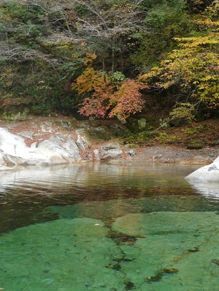 面河渓 紅葉 3