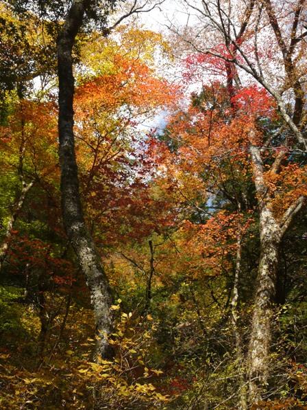 面河渓 紅葉 5