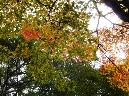 面河渓 紅葉 7
