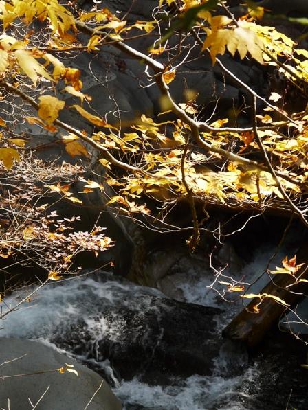 面河渓 紅葉 8