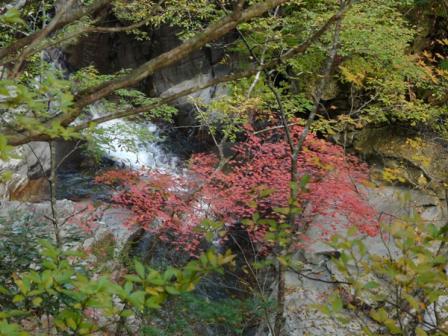 面河渓 紅葉 9