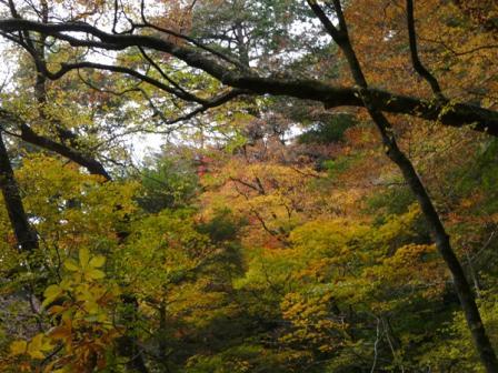 面河渓 紅葉 10