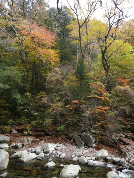 面河渓 紅葉 6