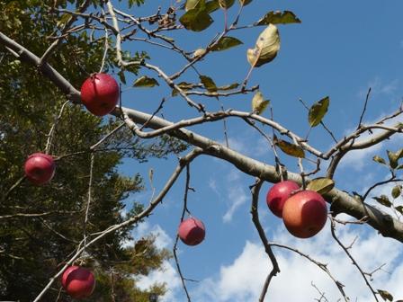 久万高原ふるさと旅行村 りんご園 1