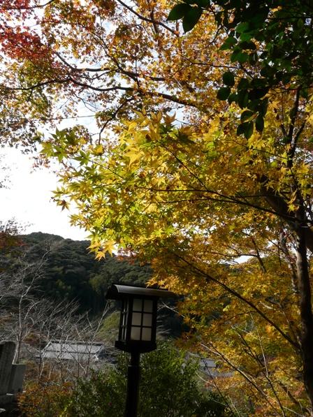 佐川町 牧野公園 2