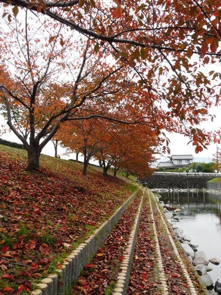 赤坂泉公園 3