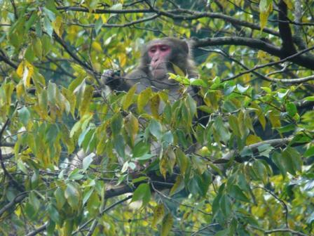マイントピア別子 猿 2