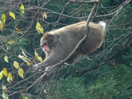 マイントピア別子 猿 4