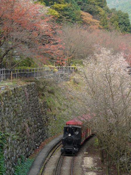 マイントピア別子 冬桜と観光鉱山鉄道
