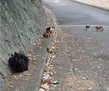 城ヶ崎のネコ達