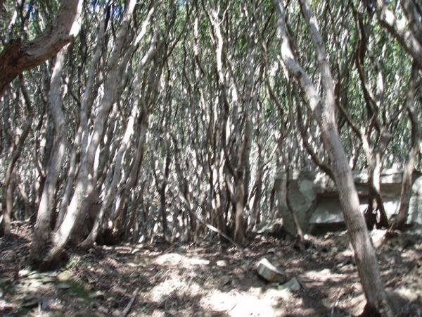 城山西壁への森