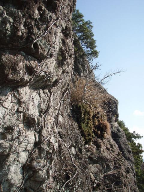 城山東南壁登られていない岩