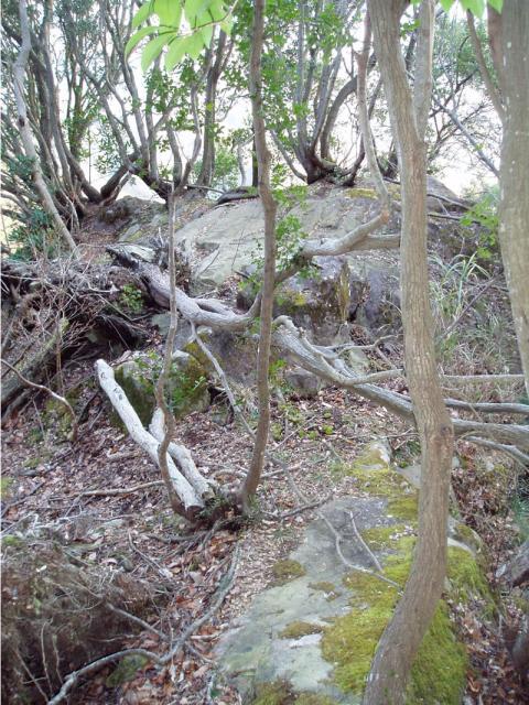 城山ポンポコランドのポン岩の頭はレストエリア