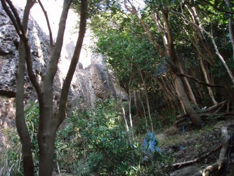 城山ライオンサミットはライオンボトムの谷間を登る