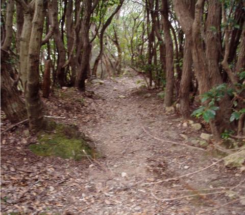 インナーウォールへ山頂からの下降路