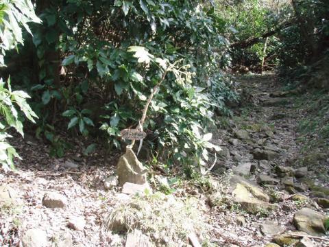 鷲頭山アプローチ岩場入口の看板