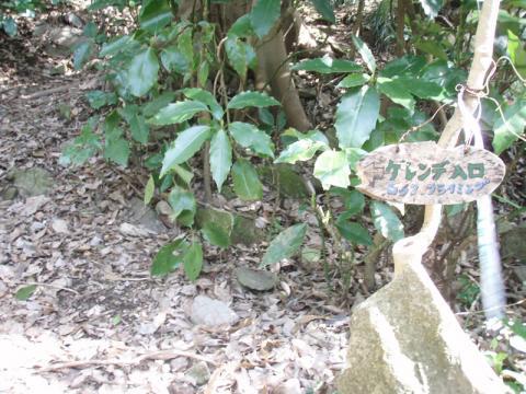 鷲頭山アプローチ岩場入口の看板アップ