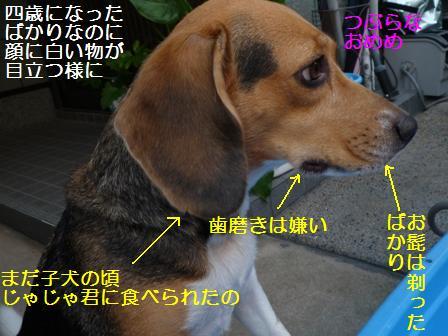 P10104405.jpg