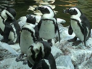 掛川花鳥園 ペンギン(写:巳子)
