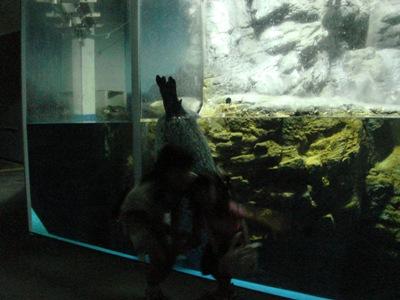 夜の水族館1