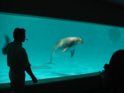 夜の水族館2