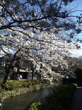 10'桜-3
